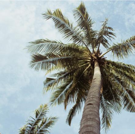 安提瓜蜜月首选: 一价全包式 度假村推荐